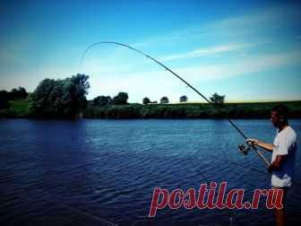 Карась (лучший учитель рыболова) | Рыбачок | Яндекс Дзен