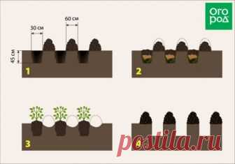 Как собрать 10 кг картофеля с 1 кв.м (выращивание по методу Квартальновой) | Картофель (Огород.ru)