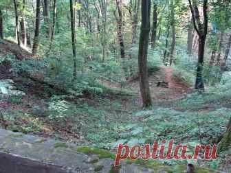 Наш любимый парк для прогулок
