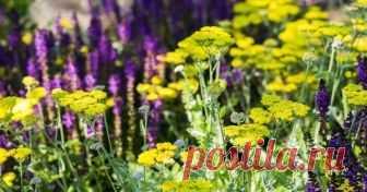 15 красивых и неприхотливых многолетников для сада Если у вас нет возможности часто бывать на загородном участке, если вы новичок в цветоводстве, или ваш сад не для капризных растений – эта подборка для вас.