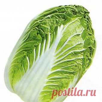 Капуста пекинская Сочи F1 2500 штук - цены, купить семена в Минске, доставка почтой по Беларуси
