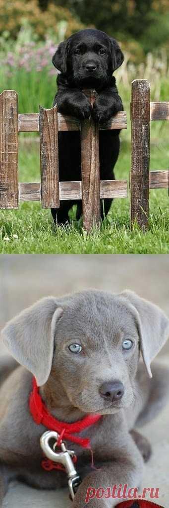 Удивительно красивые благородные собаки
