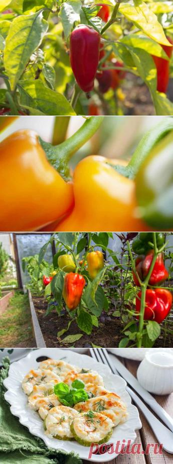 собрать теплицы урожай