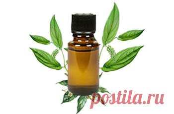 Камфорное масло, применение, лечебные свойства, 17 рецептов домашнего использования : Нетрадиционная медицина