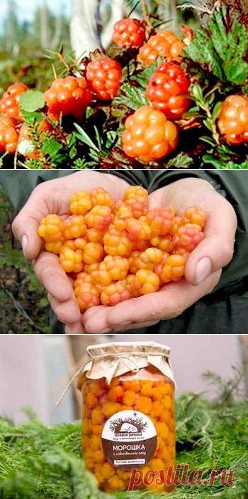 Морошка - ягода царская для вашего здоровья.