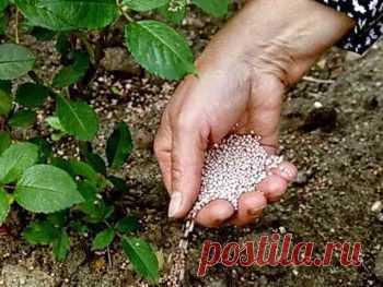 Como aplican la urea sobre la huerta y que la utilidad de ella | la Casa de campo - de provecho