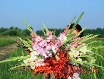 Уход за гладиолусами - Цветочное хозяйство