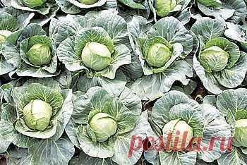 Два урожая при минимуме затрат | ОГОРОД БЕЗ ХЛОПОТ