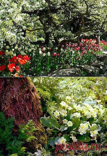 Растения для тени. Кто сказал, что тенистые уголки сада должны наводить тоску?