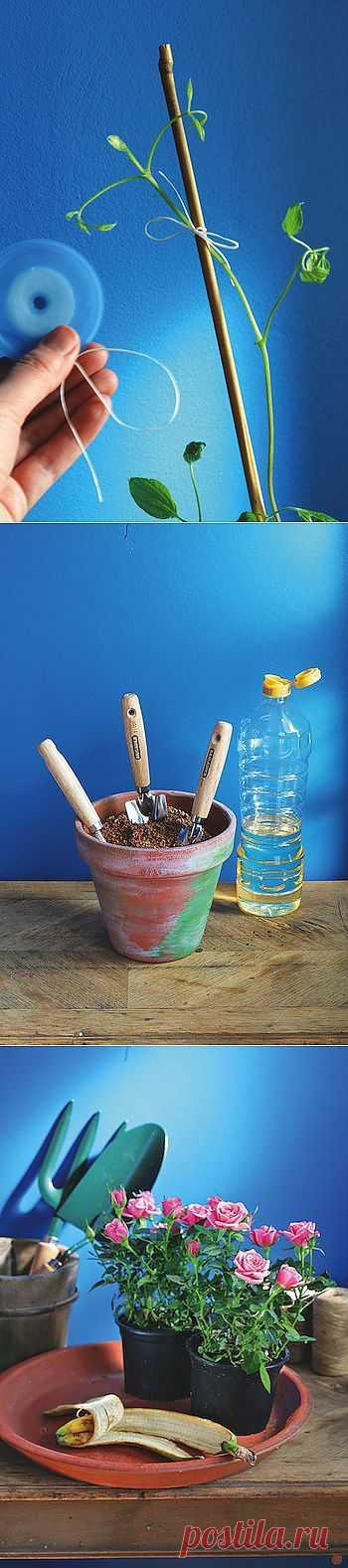 4 полезных совета для садоводов.  Старое кашпо Наполните его песком и добавьте немного растительного масла. Летом в нем удобно хранить садовые инструменты. Так они не заржавеют и всегда будут чистыми. После завершения садовых работ достаточно воткнуть лопатку, совок или рыхлитель почвы в песок и оставить до следующего раза. Еще 3 совета.