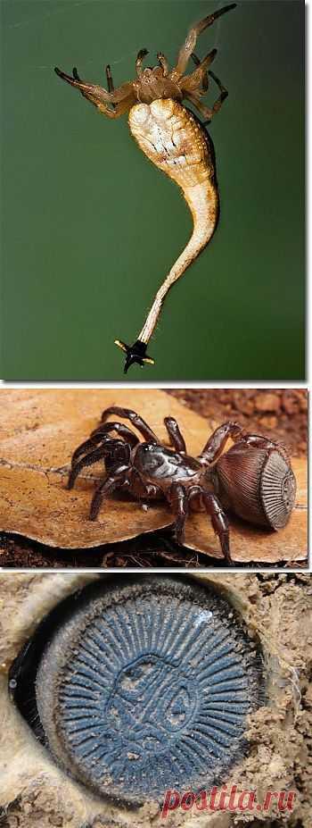 (+1) - Шестерка пауков, с которыми не пожелаешь встретиться | Наука и техника