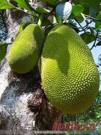 Топ-10 съедобных экзотических растений |