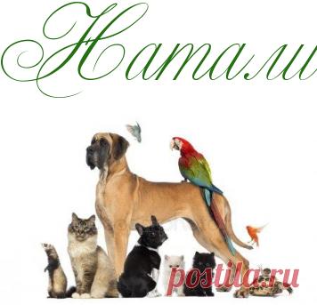 Животные - целители - Домашние любимцы - Информационно - развлекательный портал.