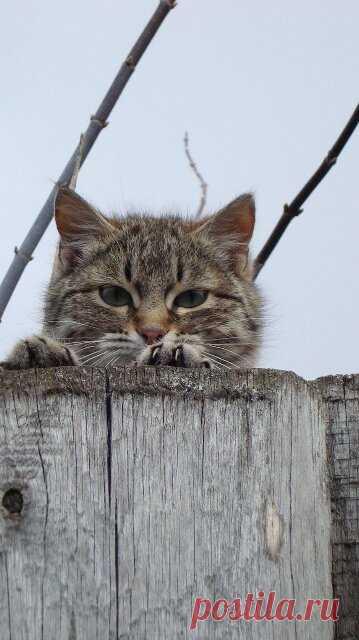 ' Скоро тебя выбросят! ' - радовалась бабка, узнав, что хозяин кота ушёл в лучший мир - так она противного кота презирала.   КОТЫ И ЛЮДИ   Яндекс Дзен
