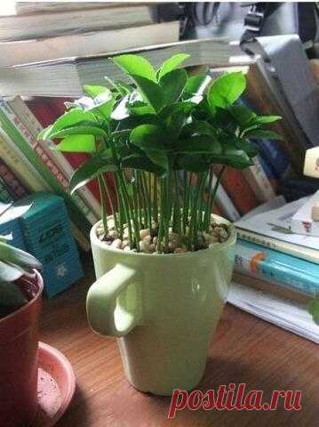 Выращиваем лимонное дерево дома!  / Взлом логики