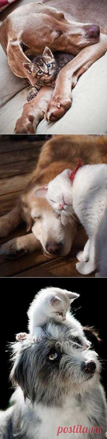 Дружбе разница не помеха: как кошка с собакой