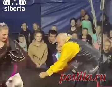Нападение медведя на российских дрессировщиков в цирке сняли на видео. В городе Березовский Кемеровской области медведь напал на дрессировщиков цирка во время выступления. Цирк шапито «Арлекин» показывал номер под названием «Ехали медведи», когда зверь начал нападать на артистов. Циркачи продолжили выступление, а зрители остались сидеть на местах.
