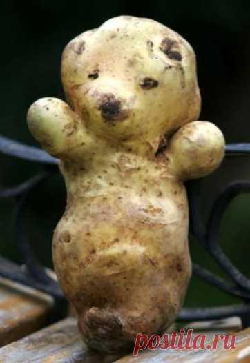 Смешные и эмоциональные овощи.