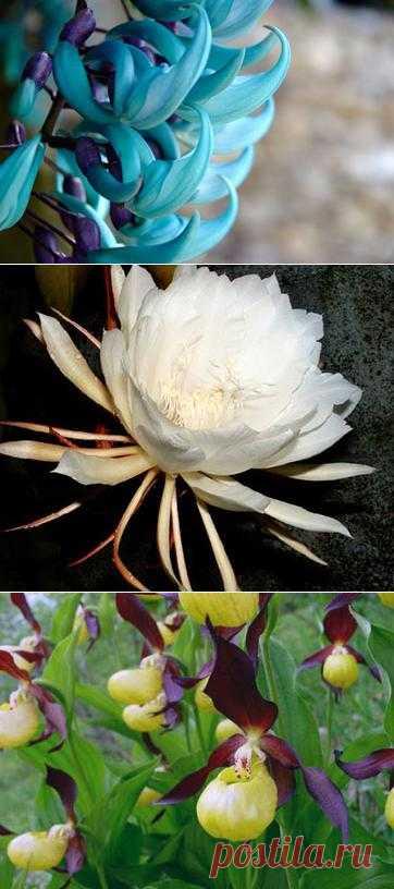 Редкие цветы