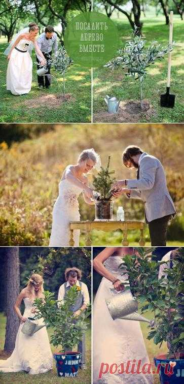 Мы не перестаём удивляться и радоваться появлению всё новых интересных и необычных свадебных традиций и, конечно, спешим делиться ими с Вами. Свадебные традиции — это не просто красивые обычаи, но и возможность разнообразить программу Вашего праздника, поэтому уделяйте им особое внимание. Сегодня мы поговорим о такой семейной, уютной и красивой традиции, как совместная посадка дерева после церемонии в качестве символа начала Вашей общей семейной жизни.