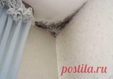 Сырость на потолке, как устранить - DYNASTY OF CHEFS Нередко случается так, что на потолке могут появиться ржавые или черные пятна, которые вызвала сырость. Естественно, при этом крайне нежелательным образом портится абсолютно весь внешний вид комнаты. Кроме того, постоянная сырость имеет «подружку»: плесень. И уж ее наличие в вашей квартире или доме совсем недопустимо, поскольку дышать спорами опасных грибков – не самое полезное занятие.
