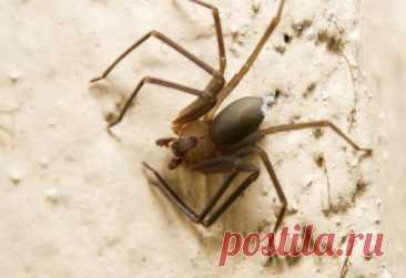 Топ-10 Страшных историй о пауках