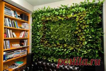 Живая стена в квартире или доме: способ декора своими руками - статья от пользователя ОБИ Клуба
