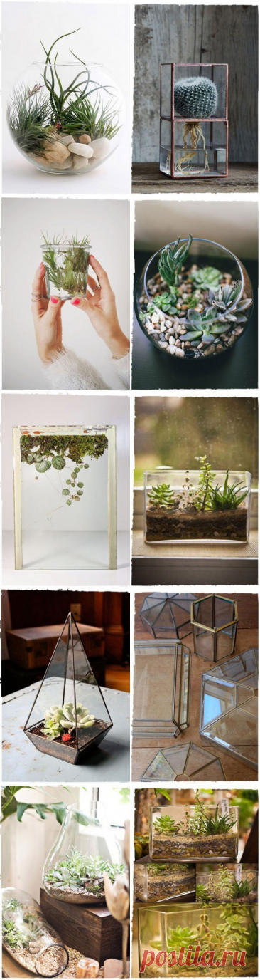 Необычные идеи для декора с растениями