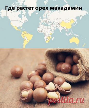 Орех макадамия: полезные свойства и противопоказания, цена, вкус и запах, калорийность, как правильно открыть и сколько можно съесть
