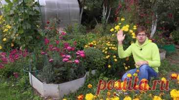 Как собрать семена цветов правильно? Видео — Ботаничка.ru