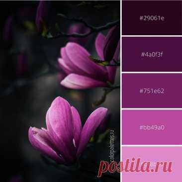 Гармоничное сочетание фиолетового. Скачать палитру с кодами цвета можно на сайте. #цветовоесочетание #цветоваяпалитра #кодцвета #цветы #flowers #colorinspiration #colorcode #colorpalette