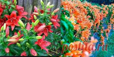 Если вы хотите, чтобы ваш сад цвел и благоухал все лето, посадите в...