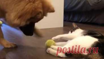 Любимая игрушка кота - это мяч)😝