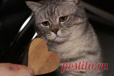 Как кошки намекают на то, чего им не хватает или чего они хотят получить   Натуралист   Пульс Mail.ru Если кошка отвернулась от хозяина или ушла в другую комнату — это ещё не значит, что она обиделась. Какого-либо негатива в «очеловечивании»...