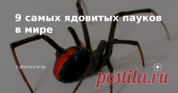 9 самых ядовитых пауков в мире Есть люди, у которых пауки вызывают панический ужас. Но и у большинства других членистоногие вызывают отрицательные эмоции. И они вполне оправданы, так как среди этого вида много смертельно опасных существ, встреча с которыми ничем хорошим не заканчивается. Какие пауки самые ядовитые? Как защитится от них, и спасти свою жизнь? ТОП-9 самых опасных пауков на планете! 1. Желтосумый паук Этот вид является лидером по количеству укушенных в мире. О...