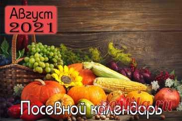 Лунный календарь работ в саду и огороде в Украине на август 2021 года