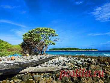 Самый большой из всех необитаемых остров Кокос В 1978 годуостров Кокосбыл объявлен Национальным парком Коста-Рики. Зона парка простирается не только в пределах самого острова, но и вокруг него. Кокос – остров вулканического происхождения. Он единственный в округе и располагается в 550 километрах от материка. Кокос не был частью континента, следовательно, животных и растения сюда заносило «попутным ветром». Некоторые виды флоры и фауны погибали, а некоторые приживались. В...
