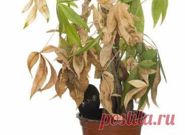 Как спасти сухие Комнатные растения Комнатные растения-это атрибут практически любого дома. В основном, выбор падает на виды, не требующие чрезмерных процедур по уходу. К сожалению, не раз и не два, они проходят тяжелое испытание, и, несмотря на наши желания, мы забываем об их поливе. Если вы не поливали растений в течение нескольких дней подряд, это может привести к их высыханию. […] Читай дальше на сайте. Жми подробнее ➡