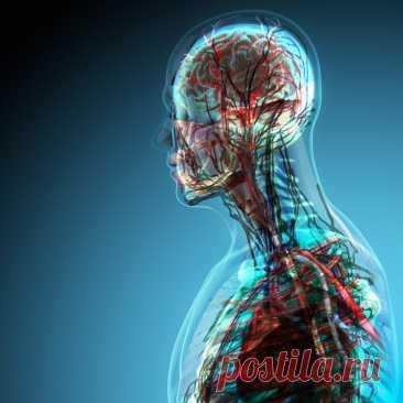 Простые упражнение для улучшения работы сердца и мозга