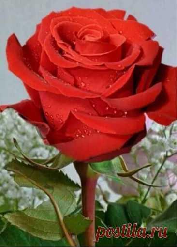 Любимым быть - удел немногих,  благоугодных небесам. Да, счастлив, кто любим - но Боги -  как счастлив тот, кто любит сам! __ Гете