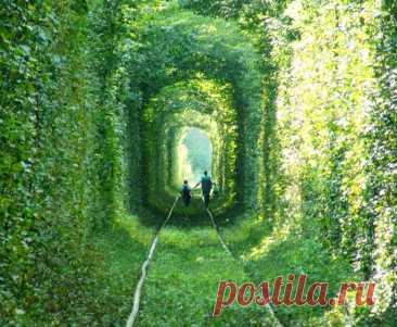Тоннель любви в разное время года