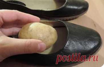 Картофель увеличит обувь на пол размера! Итак: В каждом гардеробе бывает несколько пар обуви для разной погоды. Чтобы человеку было комфортно в определенной паре обуви, нужно подбирать ее по