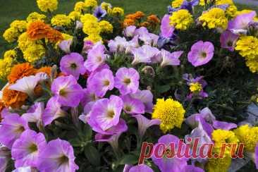 Las flores de jardín: 8 plantas más poco exigentes populares