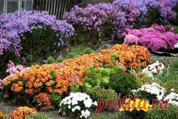Подготовка многолетних цветов к зиме — полезные рекомендации Selo.Guru — интернет портал о сельском хозяйстве