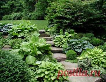 Это пластичное растение украсит любой сад, а количество ее сортов и видов поразит даже бывалого дизайнера.…