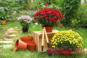 Особенности создания контейнерного сада из многолетников. Выбор растений и контейнеров. Фото — Ботаничка.ru