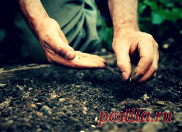 Сажаю в июне 3 ценных овоща, а осенью ‒ всегда собираю чудо-урожай!   Твоя Дача   Яндекс Дзен