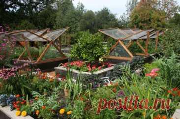 Чередование овощных культур на огороде Соблюдение севооборота часто является довольно серьезной проблемой на небольших садово-огородных участках. Особенно... Читай дальше на сайте. Жми подробнее ➡