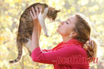 Почему кошка ложится на больное место человека Почему кошка ложится на больное место человека? Известно множество историй о том, как кошки спасали людей от сердечного приступа и гипертонического криза