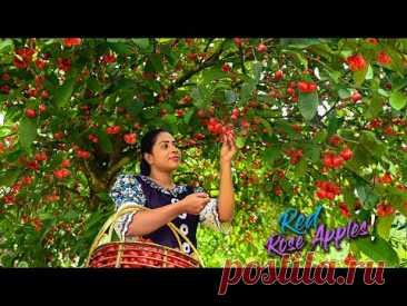 Деревенская девушка готовит блюда и десерты из розового яблока